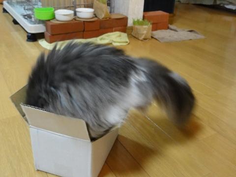 フレイヤ挑戦中01(2011.05.25)