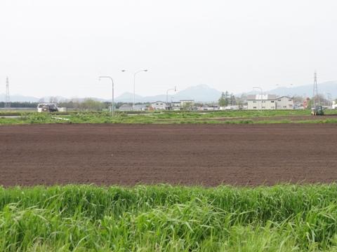 もうすぐレタス畑(2011.05.27)