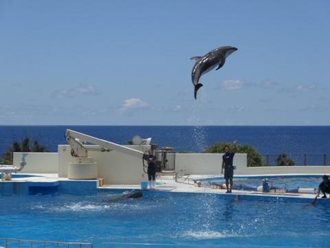 ジャンプ!(2013.08.09)