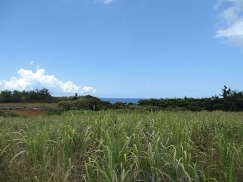 古宇利島♪11(2013.08.11)