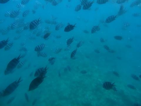 海中見物10(2013.08.12)