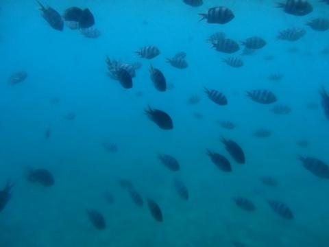 海中見物08(2013.08.12)