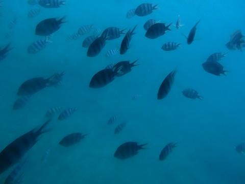 海中見物09(2013.08.12)
