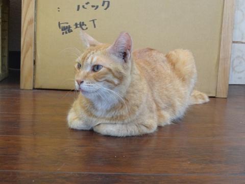 猫の家06(2013.08.12)