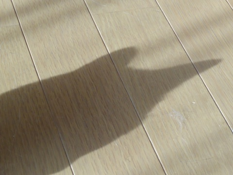 だれの猫神さま?01(2013.08.27)