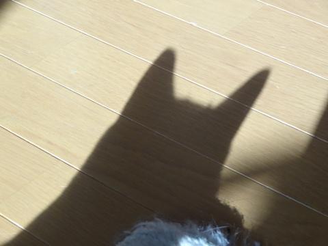 だれの猫神さま?02(2013.08.27)