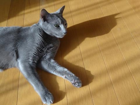 ニコライくんと猫神様(2013.08.27)