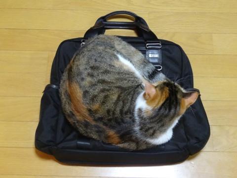 ワタクシのバッグ02(2013.09.07)