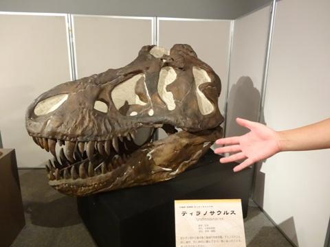 ティラノザウルス(2013.09.07)