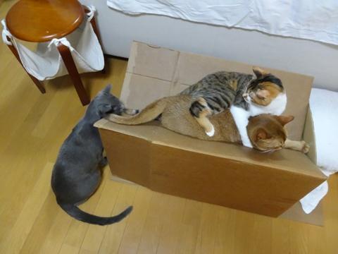 おねーにゃんの取り合い03(2013.09.09)