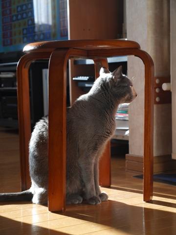 籠の猫?01(2013.10.03)