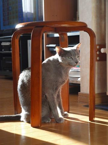 籠の猫?02(2013.10.03)