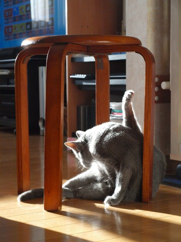 籠の猫?03(2013.10.03)