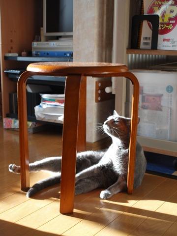 籠の猫?04(2013.10.03)