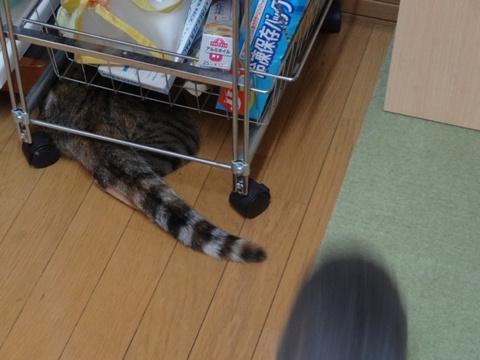 喰い意地11(2013.10.28)