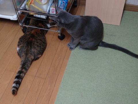 喰い意地02(2013.10.28)