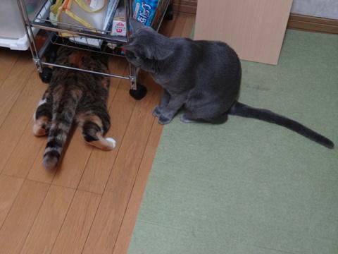 喰い意地04(2013.10.28)