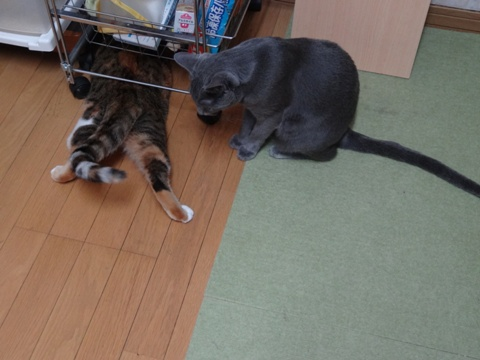 喰い意地05(2013.10.28)