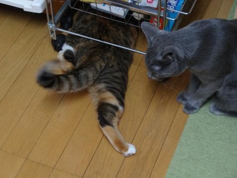 喰い意地06(2013.10.28)