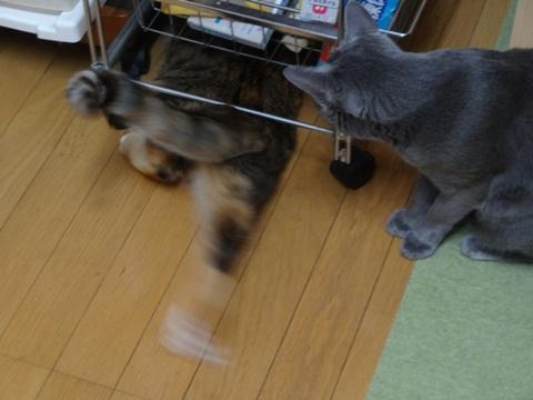 喰い意地07(2013.10.28)