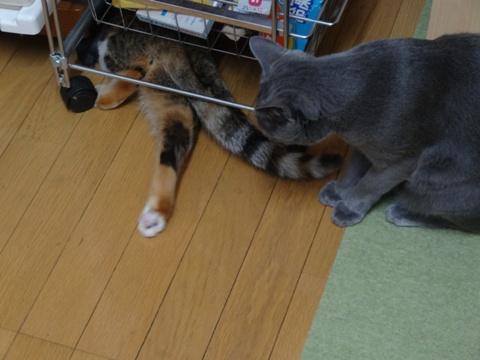 喰い意地08(2013.10.28)