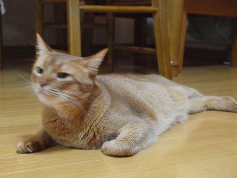 ジョゼフィン嬢02(2013.10.31)