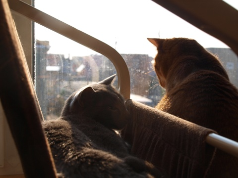 窓辺の2にゃん01(2013.11.05)