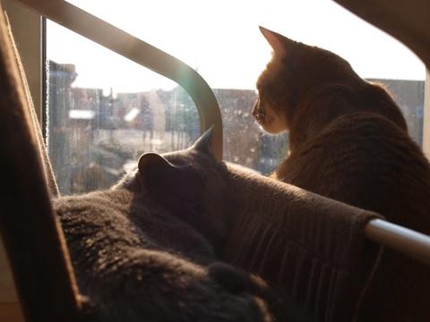 窓辺の2にゃん02(2013.11.05)