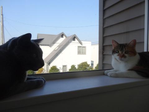 こちらも窓辺の2にゃん03(2013.11.05)