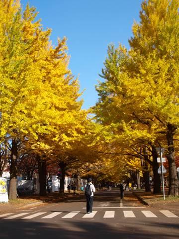 北大キャンパス06(2013.11.05)