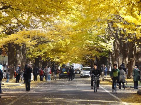 北大キャンパス07(2013.11.05)