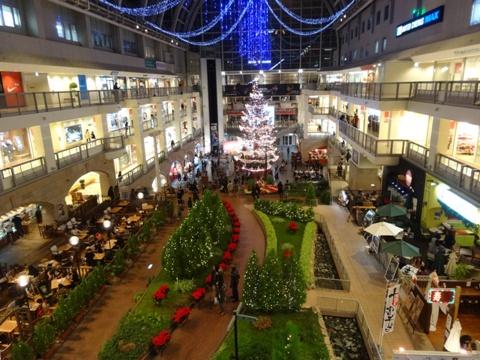 クリスマスツリー(2013.11.16)