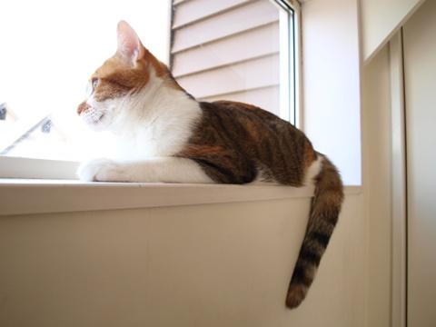 和猫のいる風景02(2013.12.07)