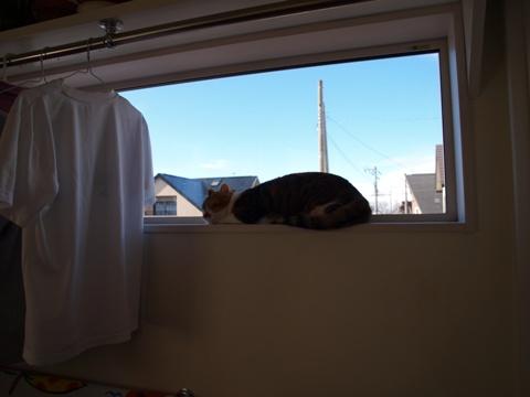和猫のいる風景0(23013.12.07)
