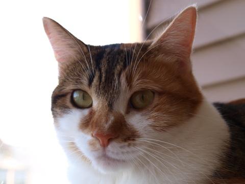 和猫のいる風景05(2013.12.07)