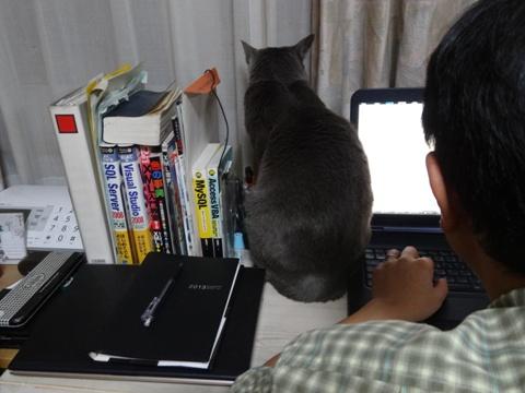 猫の手01(2013.12.10)