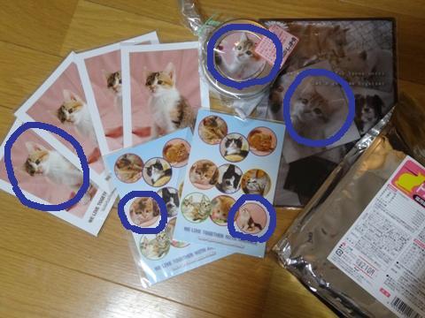 しっぽの会01(2013.12.15)