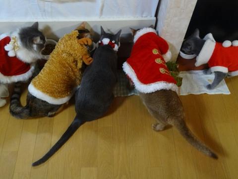 クリスマスの楽しみ(2013.12.22)