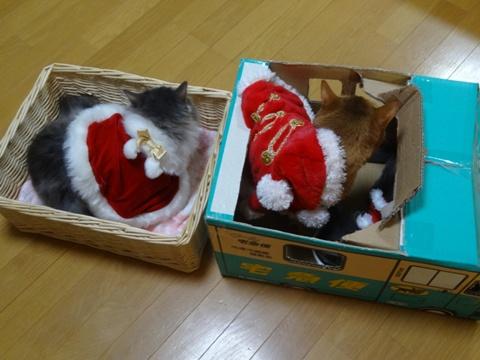 merry merry Christmas!03(2013.12.23)