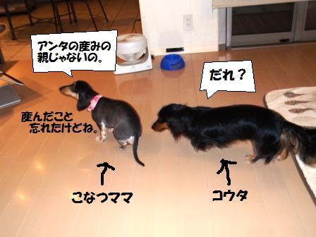 7-100613013.jpg