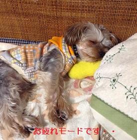 ゴンちゃん、眠ってしまいました^^