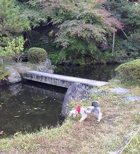 池を見ていますよー