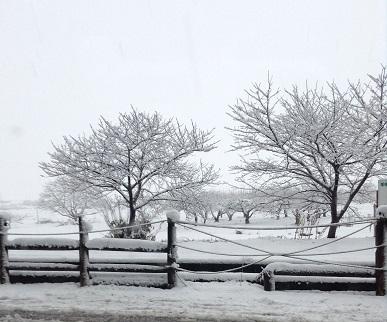夕べ、降り始めの雪。きれいですよね。