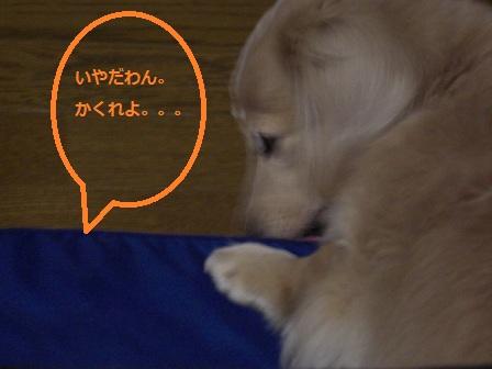 20111123007.jpg