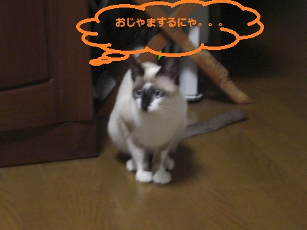 20111123009.jpg