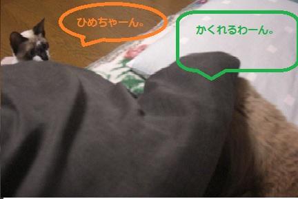 20111123011.jpg