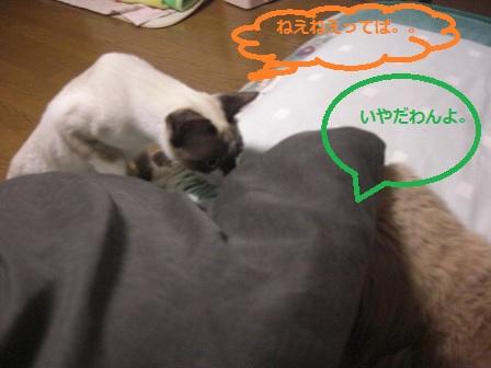 20111123012.jpg