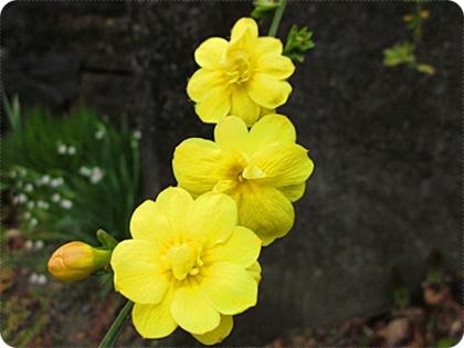 黄色の花 アップ