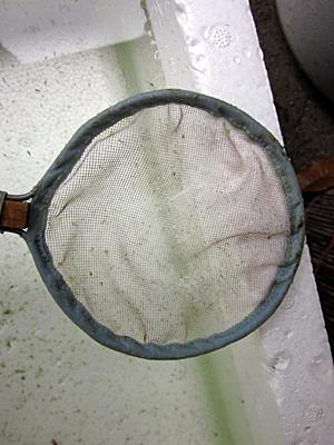 稚魚の移動用の網 五二八