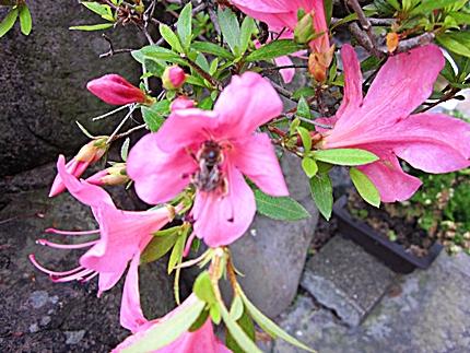 花とミツバチ 二 五三一